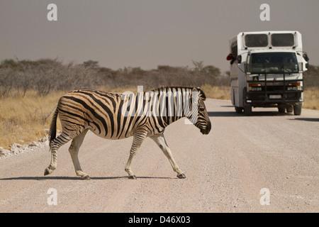 On Safari at Etosha National Park, in Namibia, Africa. - Stock Photo