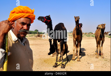 A vendor with his camels at the cattle fair in western Indian town of Nagaur, in Rajasthan state. - Stock Photo