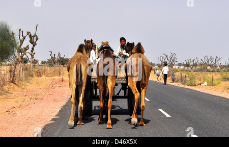Buyers lead their livestock back home from Nagaur cattle fair in western Indian Rajasthan state. - Stock Photo