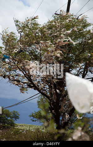 A tree filled with plastic bags, down wind from a landfill site on the island of Maui, Hawaii. - Stock Photo