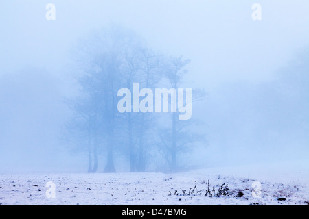 Clump of trees on misty morning with snow covered field on Boxing Day. UK - Stock Photo