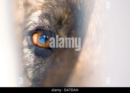 Close up of dog eye in a shelter - Stock Photo