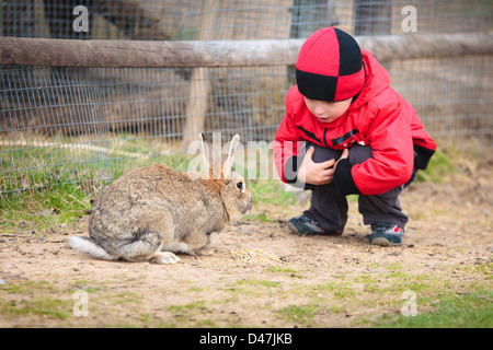 Little boy play with a rabbit - Stock Photo