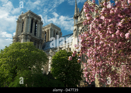 French Gothic Notre Dame Cathedral, viewed from the Square du Jean XXIII. It is Springtime and the trees are covered - Stock Photo