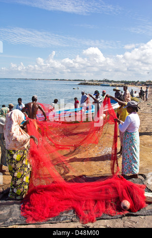 SHAKING THE NETS TO REMOVE THE CATCH OF SMALL FISH ON A BEACH IN SRI LANKA - Stock Photo