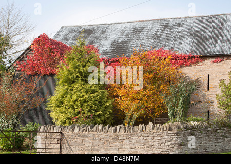 Barn surrounded by colourful trees in Autumn - Stock Photo