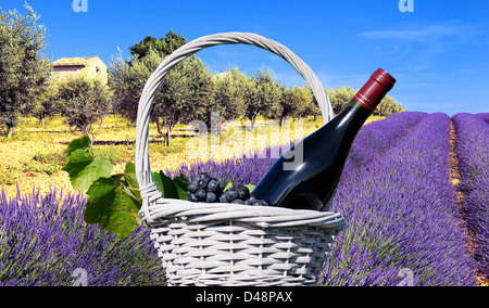 mage shows a lavender field in the region of Provence, southern France - Stock Photo