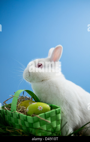 Fluffy bunny rabbit sitting with basket of easter eggs - Stock Photo