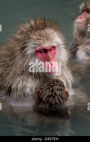 A mother and baby snow monkey enjoying an onsen - Stock Photo