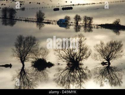 Trees in flooded fields south of Glastonbury, Somerset during floods caused by heavy rain in November 2012 - Stock Photo
