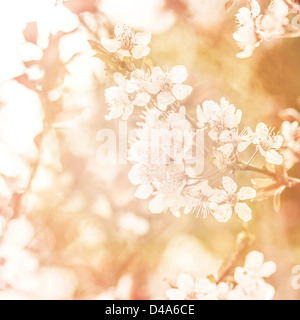 Picture of beautiful apple tree blossom, abstract natural background, grunge orange photo, fine art, spring season - Stock Photo