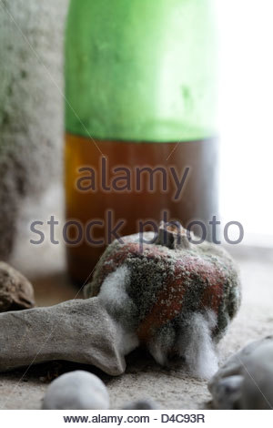 detail of old wine bottle with molding passion fruit and stones near window - Stock Photo