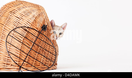 Cat peering out from wicker basket - Stock Photo