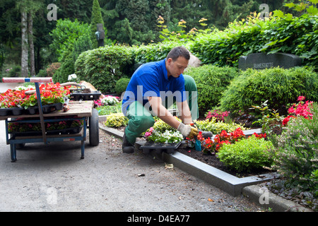 Meerbusch, Germany, a cemetery gardener planted one tomb - Stock Photo