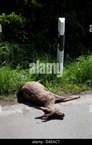 Bad Berleburg, Germany, a fawn lying dead on the road - Stock Photo
