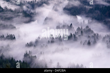 Aerial view of fog rolling over forest - Stock Photo
