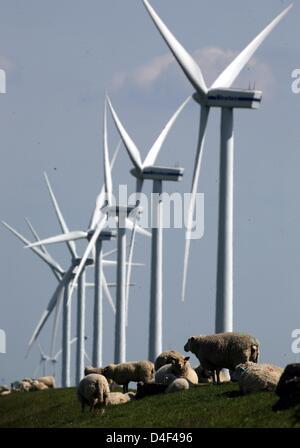 Sheep graze on the dyke under wind energy plants in Soenke Nissen ...