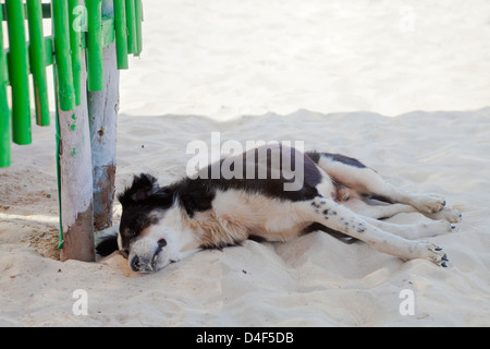 Landscape of a black and white street mongrel dog resting by a bright green fence in the shade on white sandy beach - Stock Photo