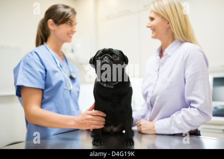 Veterinarian and owner discussing dog in vet's surgery - Stock Photo