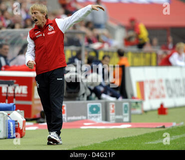Cologne's head coach Christoph Daum goes overboard in the German Bundesliga match 1.FC Cologne v FC Bayern Munich - Stock Photo