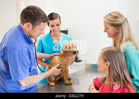 Veterinarian and owners examining dog in vet's surgery - Stock Photo
