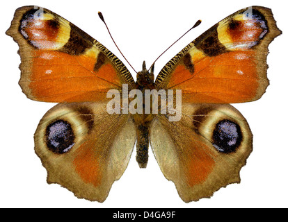 European Peacock butterfly (Inachis io) isolated on white background - Stock Photo