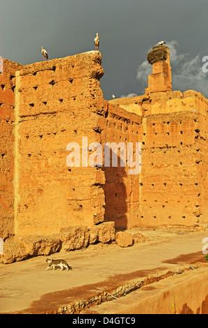 White storks, Palais Badi (El Badi Palace), Medina, Marrakesh, Morocco, North Africa - Stock Photo