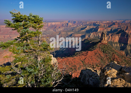 Southeast view, North Rim, Grand Canyon National Park, UNESCO World Heritage Site, Arizona, USA - Stock Photo