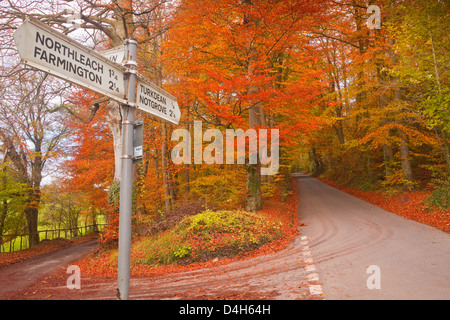 Autumn colours in the beech trees on the road to Turkdean in the Cotwolds, Gloucestershire, England, UK - Stock Photo