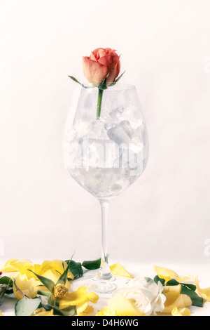 a withered rose in a glass full of ice cubes - Stock Photo