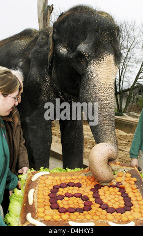 Female elephant Vilja is presented with a cake made from dough, carrots, bananas and salad on her 60th birthday - Stock Photo