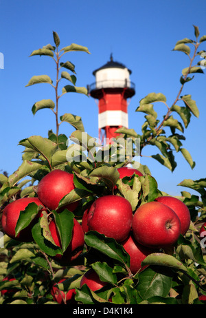 Altes Land, Gruenendeich, apple plantation near the old lighthouse at river Elbe - Stock Photo