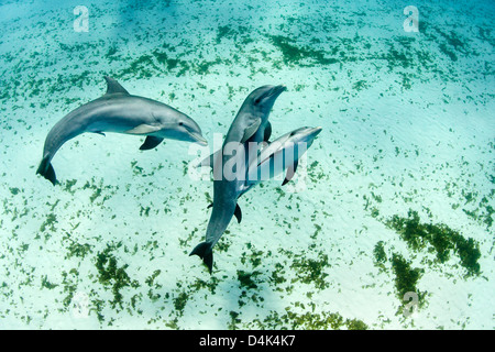 Dolphins swimming in tropical water - Stock Photo