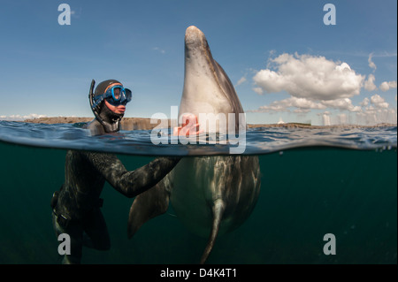 Diver scratching dolphin in water - Stock Photo