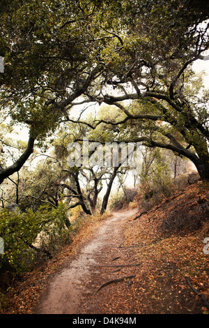 Dirt path in forest - Stock Photo