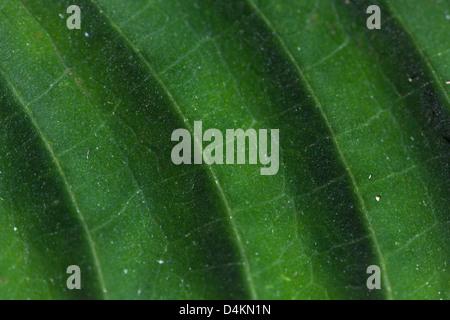 Leaf structures in La Amistad national park, Panama province, Republic of Panama.