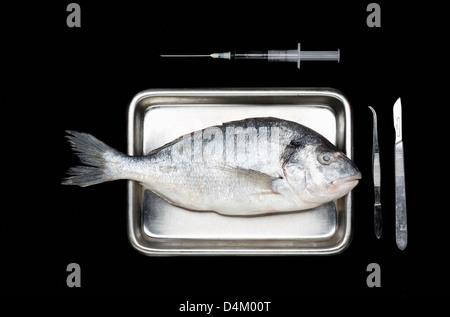 Fresh fish on surgery tray - Stock Photo