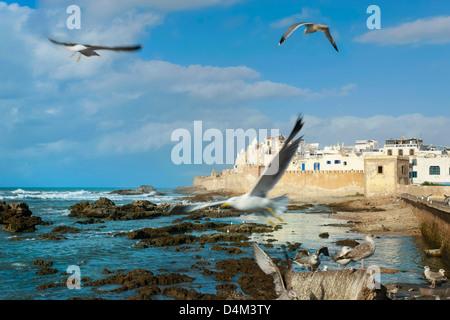 Seagulls flying over rocky beach - Stock Photo
