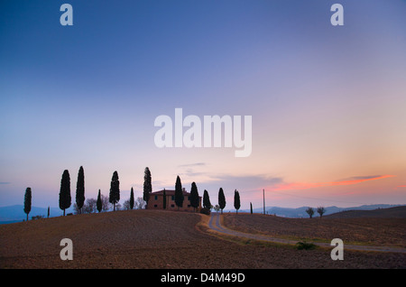 Tuscan cypress trees growing on hill - Stock Photo