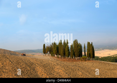 Tuscan cypress trees in dusty landscape - Stock Photo
