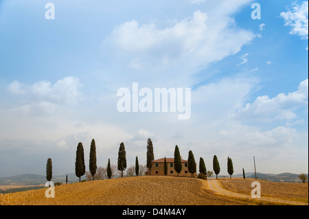 Tuscan cypress trees around house - Stock Photo