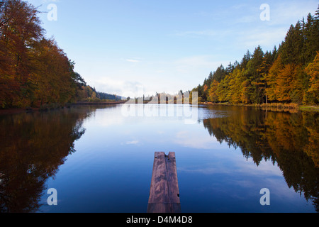 Trees reflected in still rural lake - Stock Photo