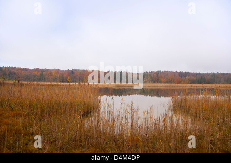 Tall grass growing by still rural lake - Stock Photo