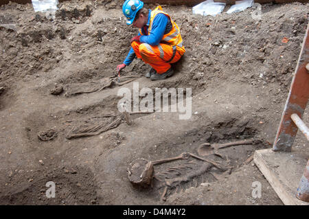 HANDOUT IMAGE: London, UK. 15th March 2013.   Discovery of Black Death burial ground dating back to the 14th century by lead Crossrail archaeologist Jay Carver.  Credit: Crossrail/Amer Ghazzal/Alamy Live News