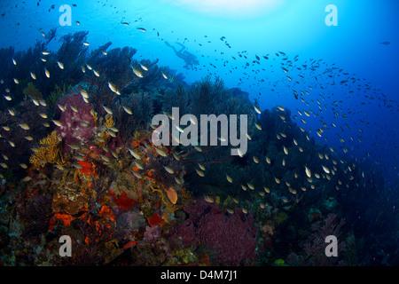 Beautiful reef scene underwater in St Lucia - Stock Photo