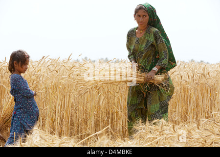 Hamzomahar, Pakistan, wife and daughter working in the fields - Stock Photo