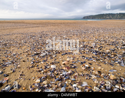 Photograph taken on the beach showing many shells scattered on the sand - Stock Photo