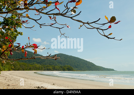Cape Tribulation Beach, Queensland, Australia - Stock Photo