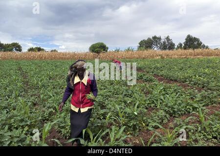 March 14, 2013 - Nairobi, Nairobi, Kenya - March 14, 2013 - Nairobi, Kenya -  Nancy Wangiri, 43, works in a field - Stock Photo