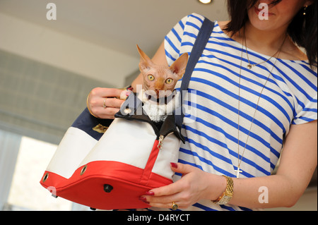 Pampered pet a Sphynx Cat in bag with female owner - Stock Photo